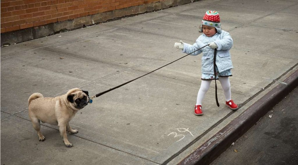 Young girl walking the dog